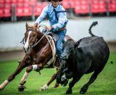 Palmers El Condo 2014 World Championship Campdraft Winner at Sydney Royal