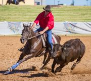 """Sire of Tony Mortimers, Little Abbey """"Cowboys Mount Reflect Photo: Barbara Lee  2nd Encouragement Rider - 2013 National Finals 1st Juvenile Draft - 2014 National Finals 1st Encouragement Rider -2014  National Finals Placed in all 3 Aaggregate @ 2014 National Finals  3rd 2015 Newcastle Royal Show Open Draft 1st Maiden - 2015 Dorrigo 1st Novice -  2015 Aberdeen   1st Open  - 2015 Rouchel"""